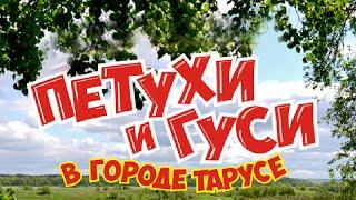 Есть ли жизнь на пенсии? Бюджетные путешествия. Экскурсия Таруса-Поленово. Поездки по России.