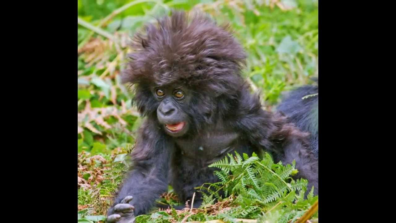 Funny Memes For Bad Days : Funny animals bad hair day slideshow youtube