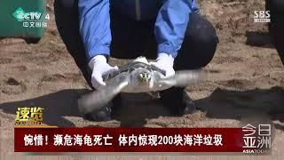 [今日亚洲]速览 惋惜!濒危海龟死亡 体内惊现200块海洋垃圾| CCTV中文国际