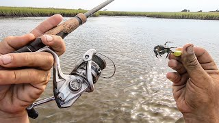 Simple Backwater Fun With Live Crabs!