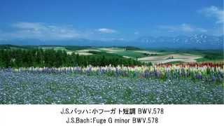 涙が出るほど?美しいクラシック名曲集・Beautiful Classical Music Collection(長時間作業用BGM) thumbnail