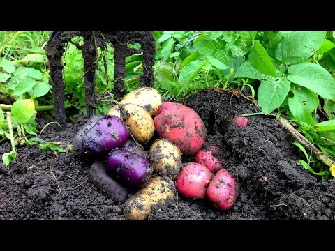 Bountiful Harvest in the Organic Vegetable Garden