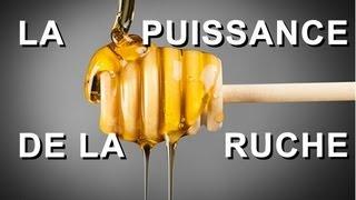 La puissance de la ruche : tout savoir sur le miel, la propolis, la gelée royale et le pollen