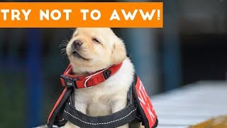Try Not to AWW! at These Cute and Funny Animals | Funny Pet Videos
