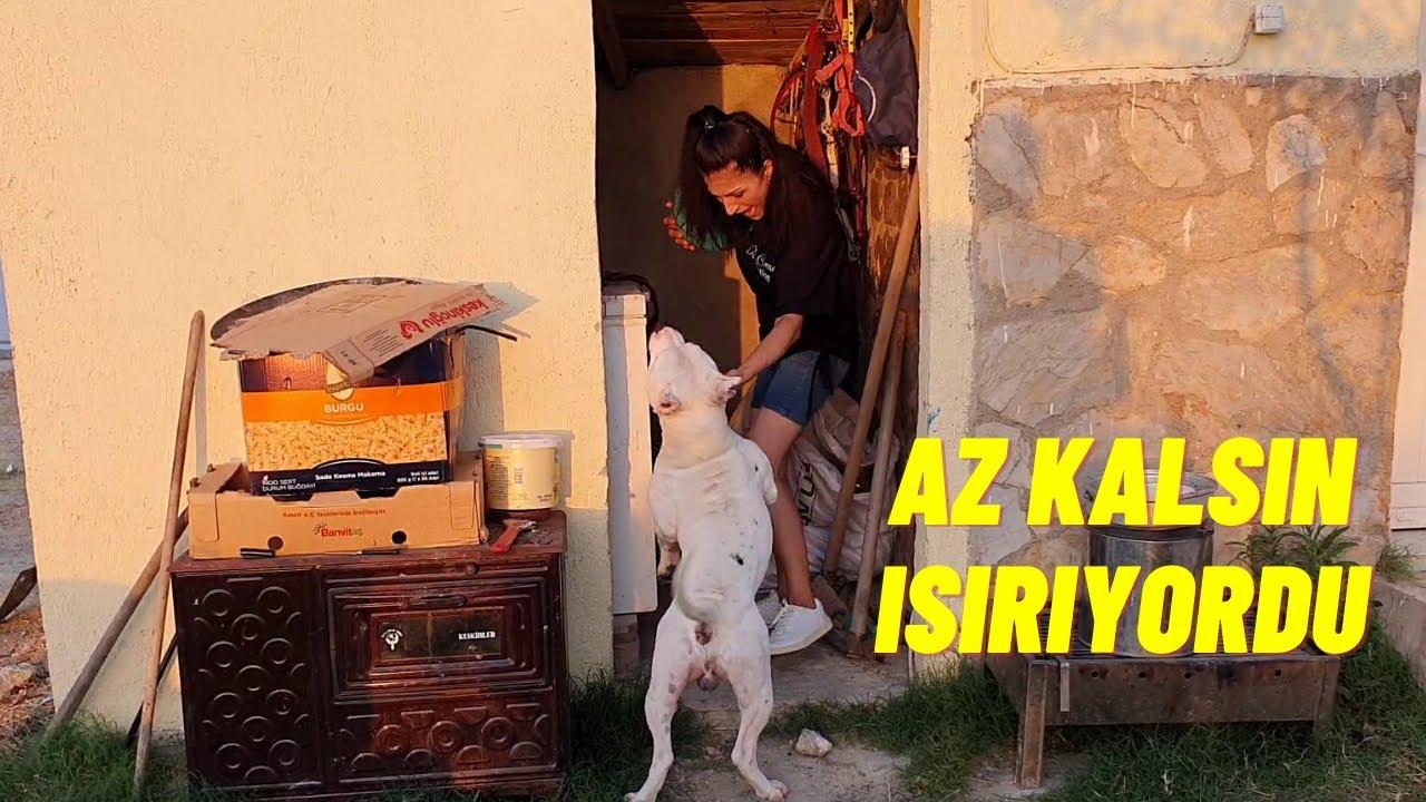 TYSON REİSLE OYUN OYNAYALIM DEDİK BAKIN NELER YAPTI !!!