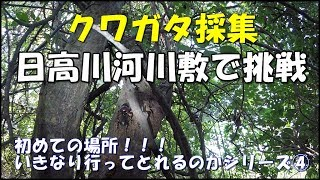 いきなりシリーズ④今回は和歌山県の日高川に行ってきました。 クワガタ...