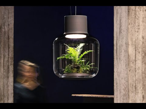 This self-sustaining plant ecosystem helps you light up your home