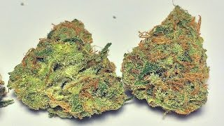 """Pineapple Super Silver Haze"" - (Strain Review)"