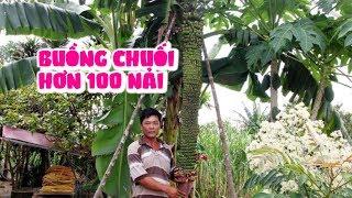Kỳ lạ buồng chuối 'khủng' dài 2 mét với hơn 100 nải ở Lâm Đồng