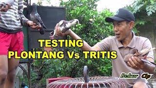 TEST Merpati PLONTANG Vs TRITIS