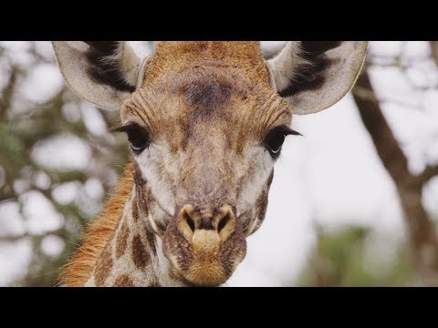 South Africa's Weirdest Animals | Wild Lands: South Africa | BBC Earth