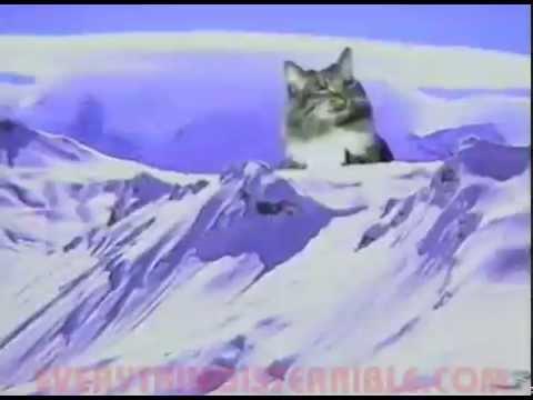 death metal xmas cats youtube. Black Bedroom Furniture Sets. Home Design Ideas