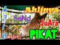 Ahlinya Sang Juara Pikat Perkutut Lokal Gacor Paling Ampuh Dan Ajib Bangettttt  Mp3 - Mp4 Download