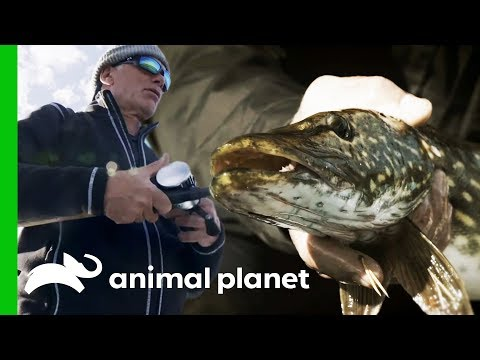 Jeremy Searches For Monster Pike In The Lakes Of Sweden | Jeremy Wade's Dark Waters
