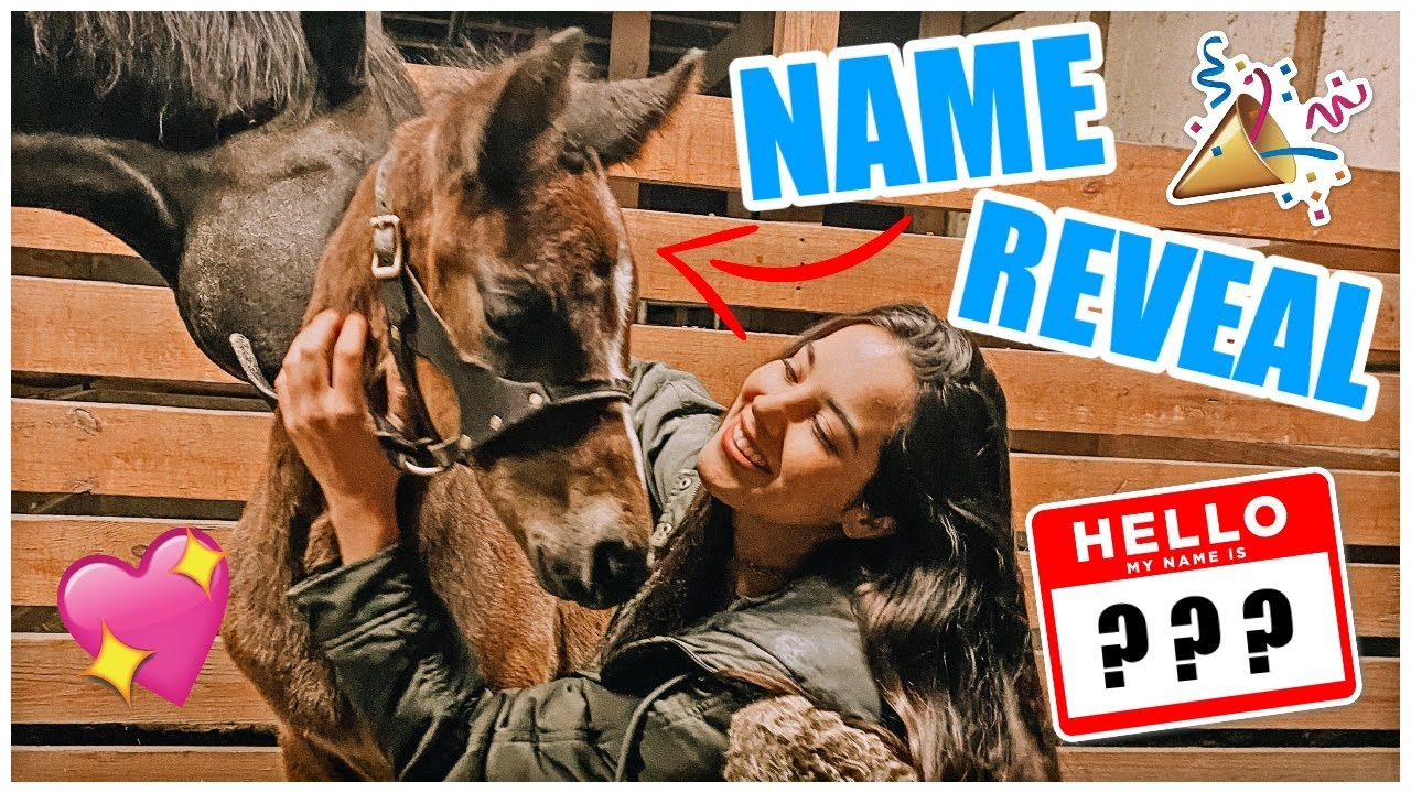 NAME REVEAL! | My Pregnant Horse Pt.17