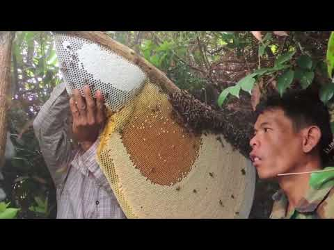 The two mens prepare for get honey bee ||by technical mamdul