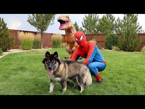 Spiderman SAVES Kakoa From T-Rex!