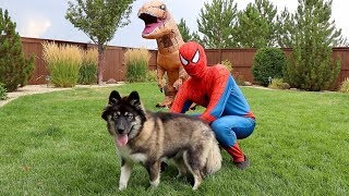Spiderman SAVES Kakoa From T-Rex!