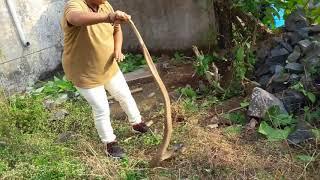 snake catcher gujrat..valsad vapi bhavna patel  jeevdaya group pardi  (guj)  mo 9328097271 free seva