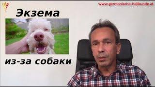 Экзема из-за собаки