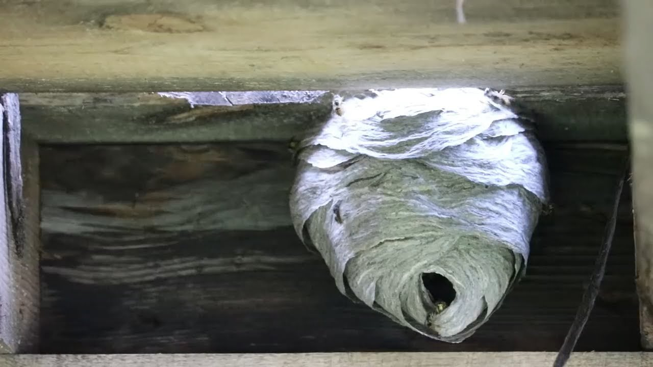 this-wasp-nest-was-hiding-under-our-hot-tub-yikessss