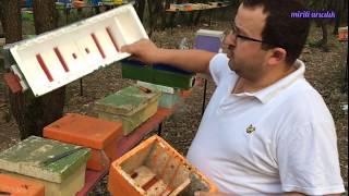 Mini ana arı kutuları hakkında