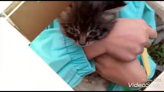 Пятеро котят with LERA X