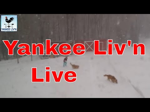 Nor'easter, Blizzard Hit's Yankee Liv'n in Maine 3/13/18