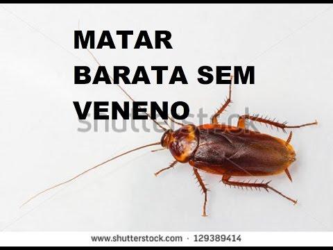 Matar Barata sem Veneno-Veneno Caseiro-Natural