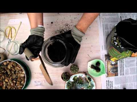 Diy como hacer un terrario de suculentas reciclando - Como construir un terrario ...