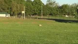Jug Dog Playing Fetch