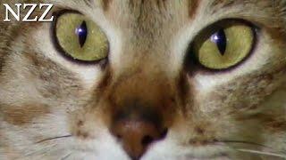 Katze: das geliebte Biest - Dokumentation von NZZ Format (1994)