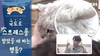 [고부해] 고양이가 극도로 스트레스를 받았을 때 행동?