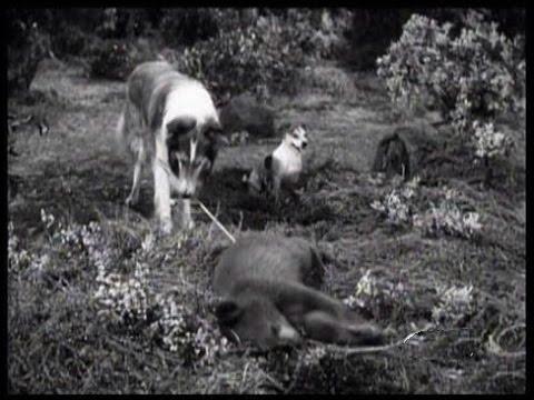 "Lassie - ""The Archers"" - Episode #155 - Season 5, Ep. 12 - 11/23/1958"