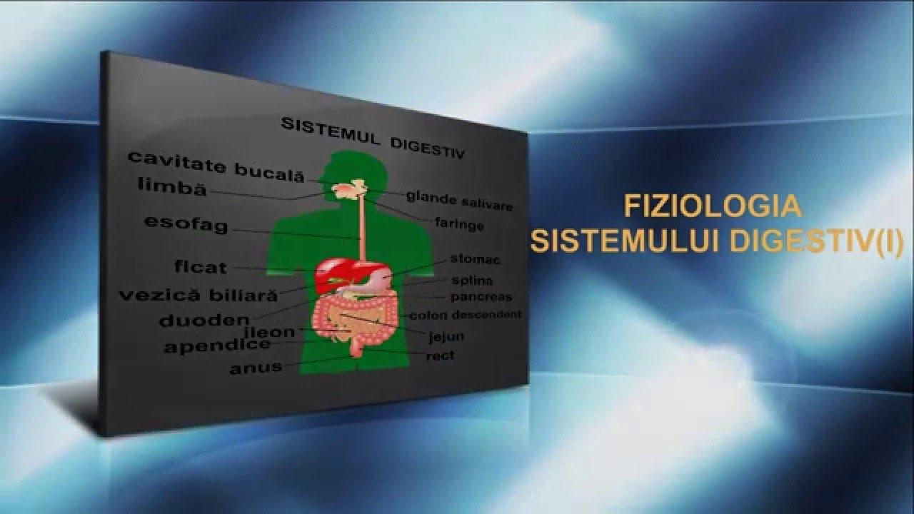 viermii încrucișați au un sistem digestiv