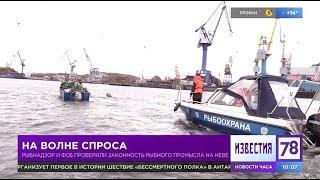 В Петербурге ловили корюшковых браконьеров