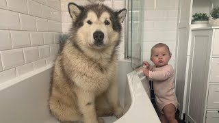 Giant Sulking Dog Hates Bath Time But Baby Helps Him (Cutest Duo EVER!!)