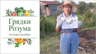 Органические грядки Розума для сада-огорода. Посадка малины.(, 2016-08-01T16:44:41.000Z)
