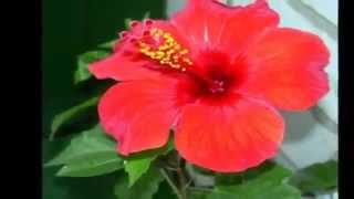 Доброе Утро! Хорошего Дня! mp4(С добрым утром дорогие друзья! Хорошего настроения, успешного дня!, 2015-02-17T22:11:14.000Z)