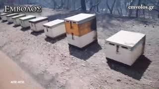 : Σε ύφεση η πυρκαγιά στο Κοντοδεσπότι Ευβοίας