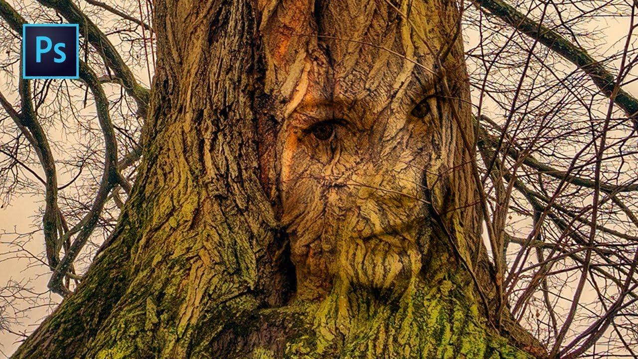 photoshop incruster un visage dans un tronc d 39 arbre. Black Bedroom Furniture Sets. Home Design Ideas