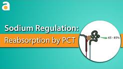 Sodium Regulation: Proximal Convoluted Tubule