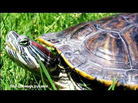 ТОП-10 ошибок при содержании красноухих черепах!/TOP 10 mistakes in the content slider turtles!