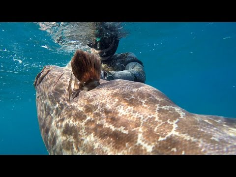 Spearfishing the Caribbean: Trinidad and Tobago 2016