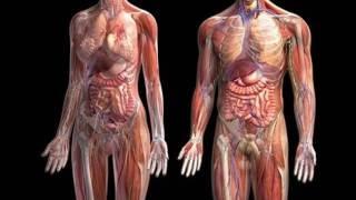 introduccin-a-la-anatoma-anatoma-topogrfica-y-anatoma-descriptiva