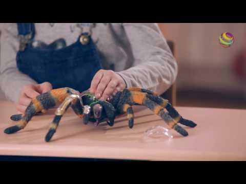 Обзор 4D Master  серия Анатомия животных