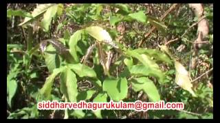 Repeat youtube video miracle herbal research-kolli malai tour part-2