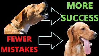 Top Mistakes with Reactive Dog Training
