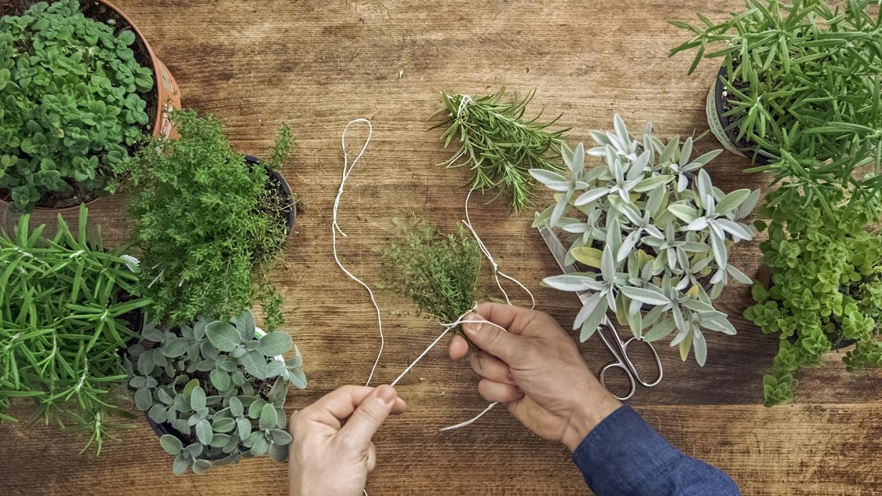 Come Seccare Le Piante how-to: essiccare le erbe aromatiche, come rosmarino, timo, origano &  affini | fooby
