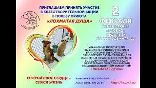 Подольск - город открытых сердец. Благотворительная акция в пользу бездомных животных.
